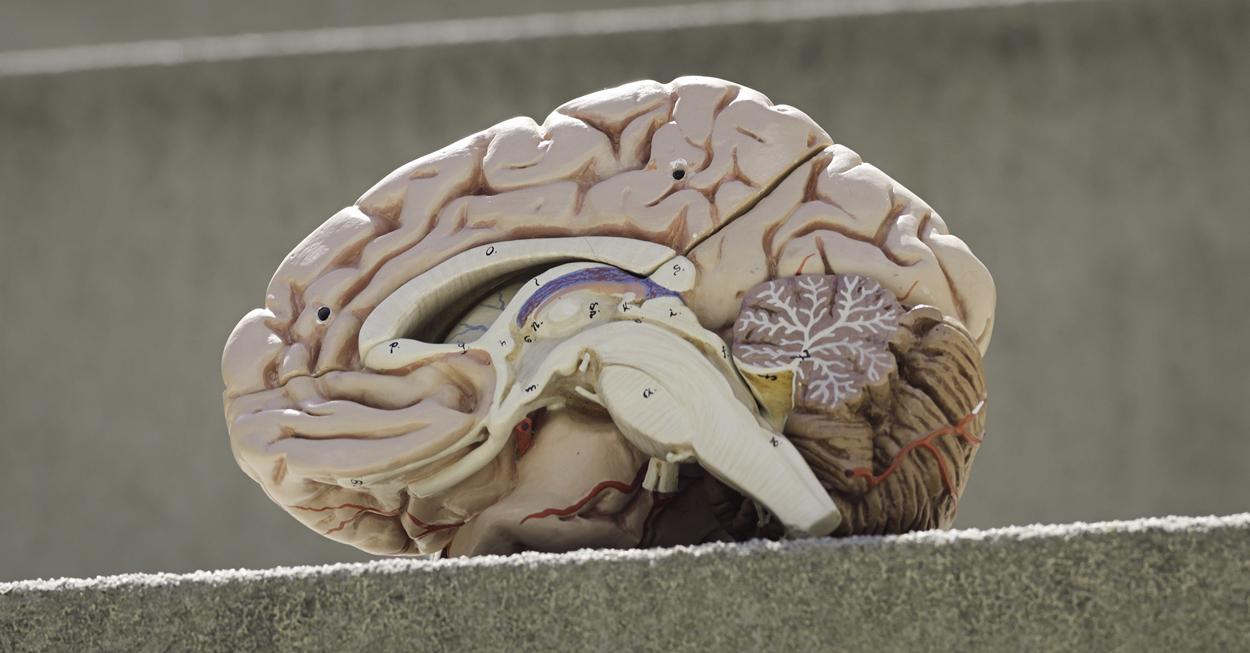 Labor für Aktive Wahrnehmung : Hertie-Institut für klinische ...
